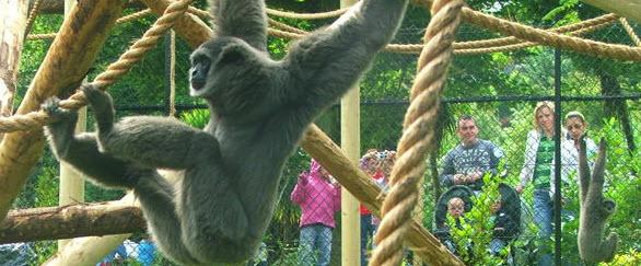 Monkey at Belfast Zoo